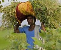 Farm sector crisis: Congress in Maharashtra seeks PM Modi's intervention