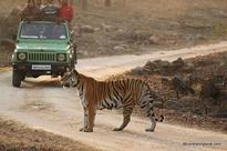 Maharashtra shifts focus from core forest areas to buffer zones for eco-tourism