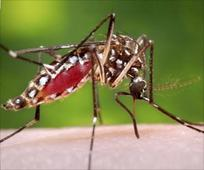 Delhi's Dengue Death Toll Hits 30, Total Number If Cases Rise to 9,438