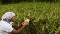 Cabinet clears decks for India-Poland agri pact