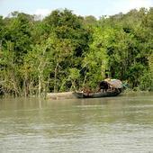 Zoological Survey of India monitoring climate change impact on Sundarban animals
