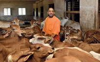 The Yogi of fear and hope: Why Modi-Shah picked Hindutva hardliner Adityanath for UP