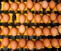 Belgian biscuit maker recalls products amid contaminated eggs scare