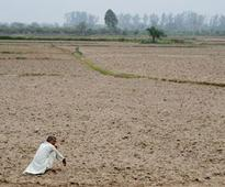 Farm tragedy: Over 800 farmers committed suicides this year, says minister