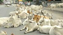 Gujarat: Police team attacked by mob allegedly taking cows for slaughter in Godhra