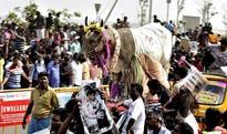 Bucks behind the bull: Here's how Jallikattu impacts Tamil Nadu's economy 1 hour ago