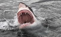 Shark Attacks Surfer In Australia