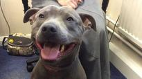 Happy face: Missing pet dog found at UK airport after 8 months