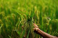 Both rabi, kharif crops hit by monsoon vagaries: RBI