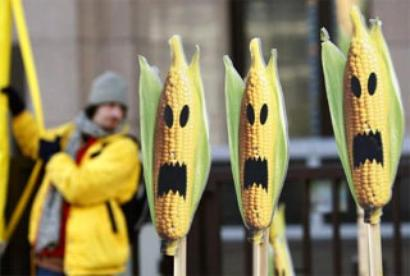 Modi's 'Make in India' bats for GM food crops