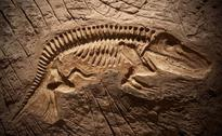 Pre-Jurasic Era Fossil of Marine Reptile Found in South Wales