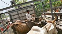 Cow vigilantism: States need to compensate victims, says SC