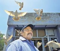The love and passion of pigeon keeping in Old Delhi
