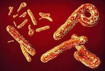 Experimental Ebola vaccine found safe, effective