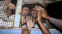 2002 Sardarpura riots: Gujarat HC acquits 14, upholds life term of 17