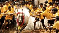 Commenting without comprehension: Tamilians more important for India than ills of Jallikattu 1 hour ago