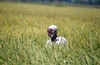 India may cede top rice exporter spot under Southeast Asian price onslaught