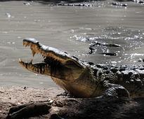 Crocodile rips off Bengaluru